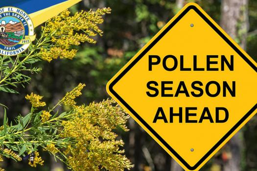 Recent High Winds stirring up Plenty of Pollen and Allergies